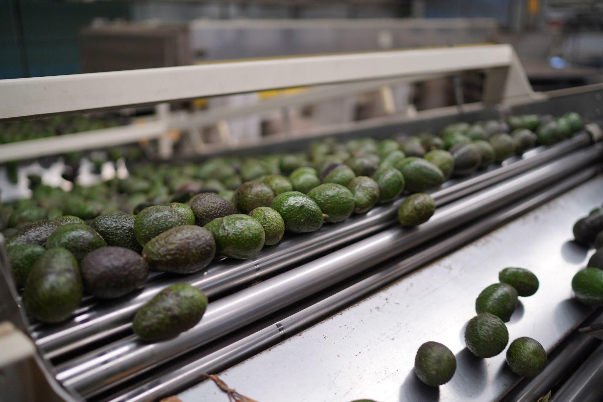 Inflación acumula 6 meses por encima del rango del Banco de México. Entramos al mes patrio con tacos y salsas al alza